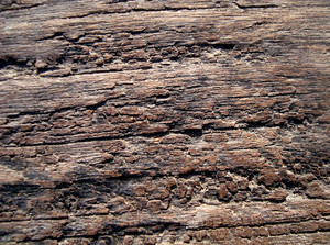 Very_old_wood