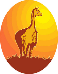 Vicuna Standing With Sun In Background