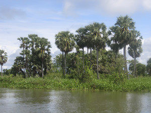 Views Of Nature In Cambodia
