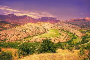 Vineyards on mountain hill