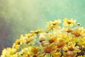 Vintage flowers in the rain