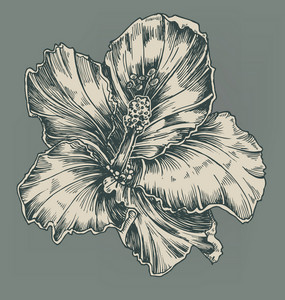 Vintage Hibiscus Vector Illustration