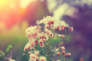 Vintage natural autumn dandelions background
