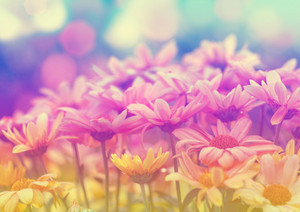 Vintage natural flower background