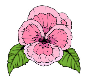 Vintage Pink Poppy Flower