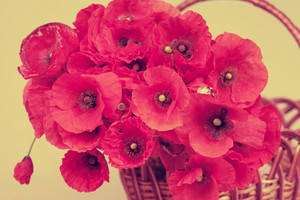 Vintage poppy flowers in a basket