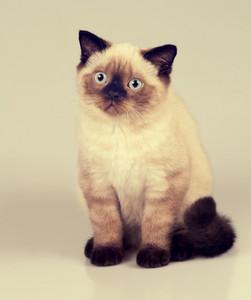 Vintage portrait of cute little kitten
