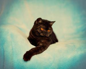 Vintage portrait of cute playful cat