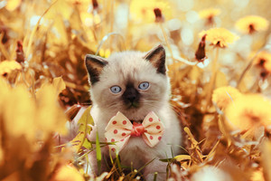 Vintage portrait of little kitten in flowers