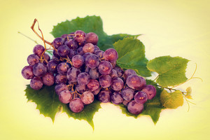 Vintage red wet grapes bunch
