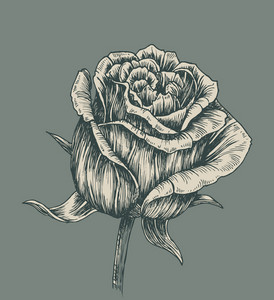 Vintage Rose Vector Illustration