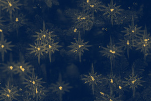 Vintage Stary Background