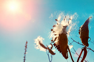 Vintage toned autumn theme for background. Dry plant against blue sky with sun