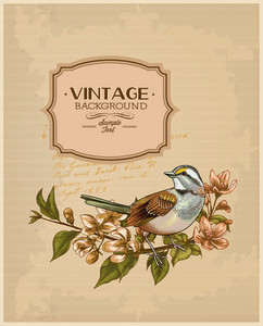Vintage Vector Illustration With Spring Flower, Frame , Bird
