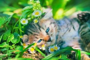 Cute kitten have a rest on the grass