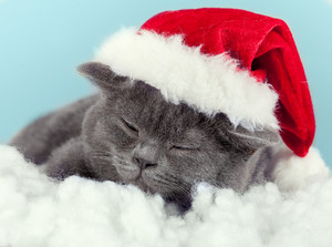 Sleeping little kitten wearing Santa hat