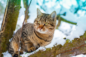 Portrait of cat on the snowy tree in winter
