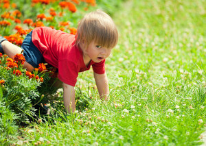 Little boy crawls on all fours in the lawn