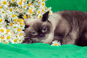 Portrait of cat with flowers