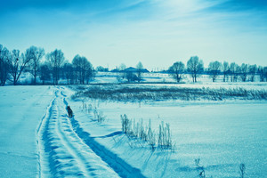 Winter snowy field. Blue toning