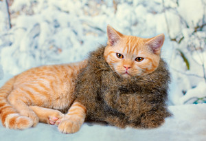 Cute kitten wearing fur scarf