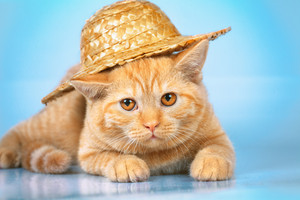 Cat wearing a straw hat