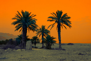 Retro background with palm trees in dessert