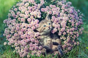 Gatinho bonito que relaxa em flores