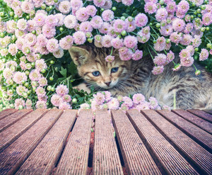 Cute little kitten in flowers near wooden board