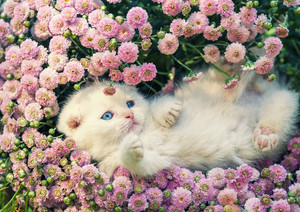 Cute kitten relaxing in flowers