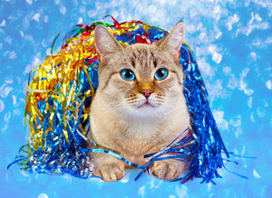 Cat with Christmas decorations