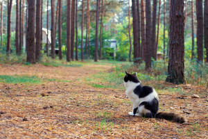 Black and white cat sitting in the woods