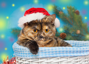 Cat wearing a Santa hat sits in a basket