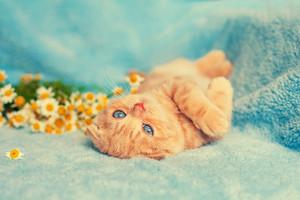Cute kitten on blue blanket