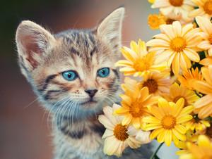 Portrait of cute little kitten with flowers