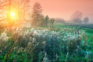 Cobwebby meadow at misty sunrise