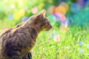Cat walking in a tall grass
