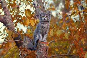 Cute siberian cat sitting on a tree