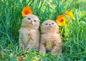 Cute little kittens sitting in flower meadow
