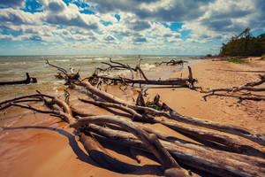 Wild desert beach with fallen trees. Cape Kolka