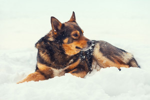 Dog lying on the snow