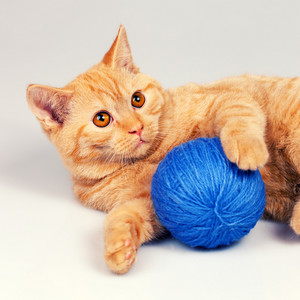 Ginger kitten with blue ball of yarn
