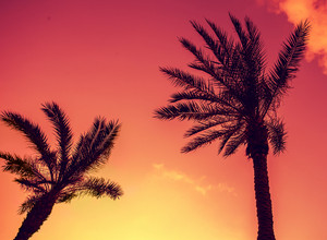Vintage tropic palm trees against sky at sunset light