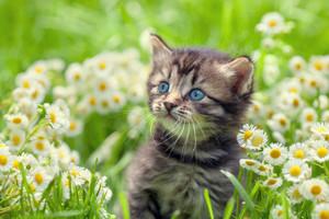 Portrait of cute little kitten outdoors in flowers