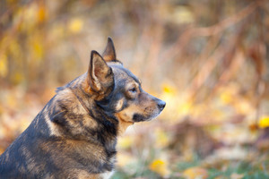 Portrait of dog outdoors in autumn