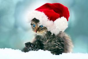 Little kitten wearing a Santa hat