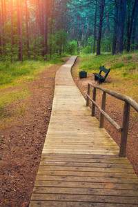 Wooden pathway in the forest