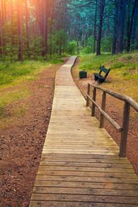 在森林木途徑