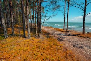 Deserted sea coast