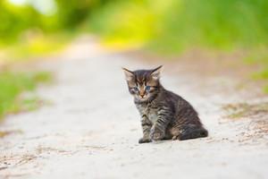 Little kitten on the sandy road